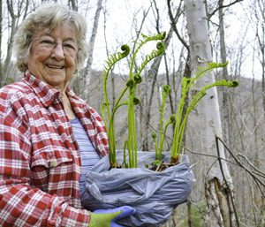 Older woman in the wood wearing a red and white shirt holding a bag of fresh fiddleheads to transplant.